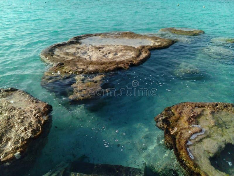 Stromatolitos lizenzfreie stockfotos
