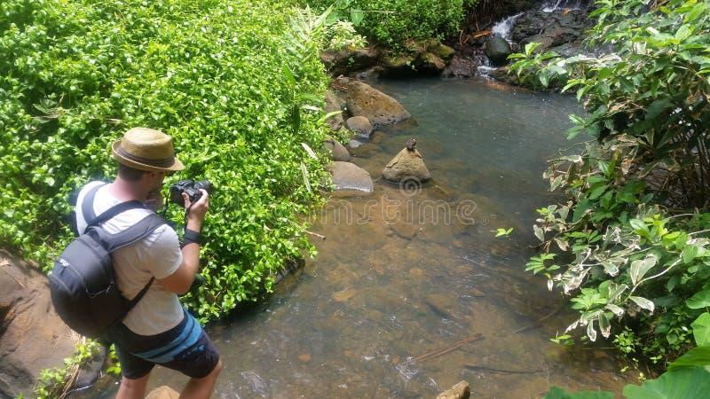 Stromende kreek in de staat van Hawaï stock foto's