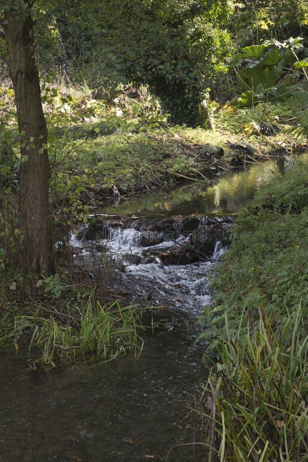 Stromende stroom met weinig waterdaling royalty-vrije stock foto
