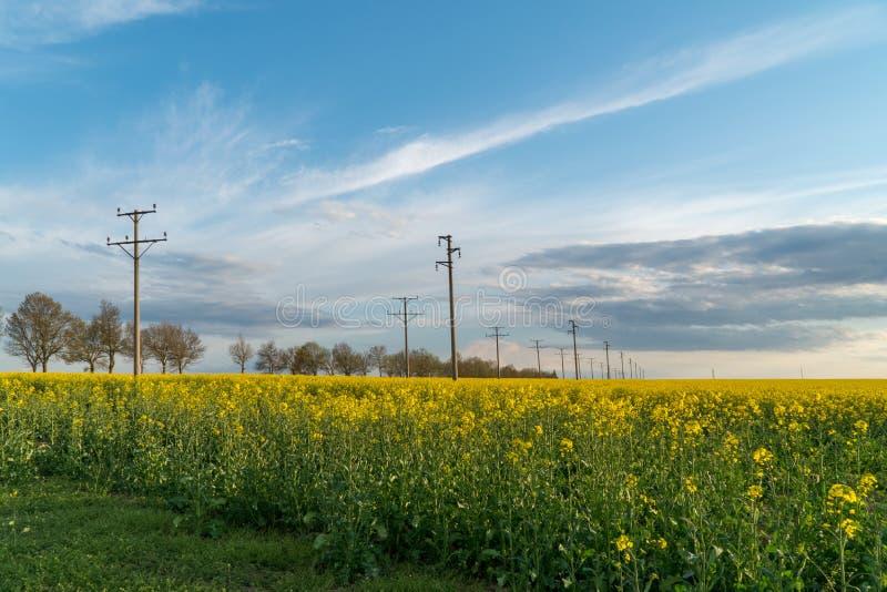 Stromleitung im Rapsfeld lizenzfreie stockbilder