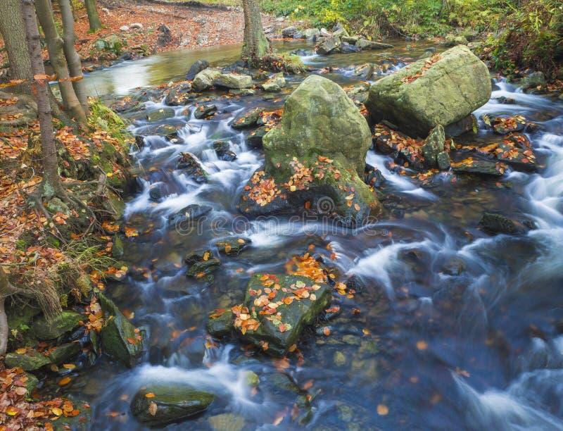 Stromnebenfluß der langen Belichtung magischer Waldim Herbst mit Steinen MO stockfotografie