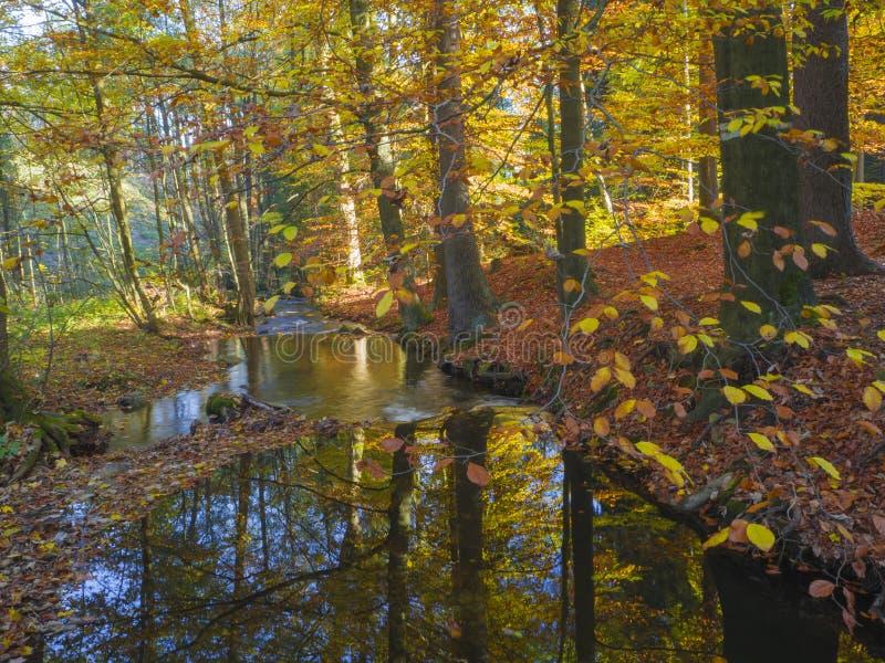Stromnebenfluß der langen Belichtung magischer Waldim Herbst mit Steinen MO lizenzfreies stockbild