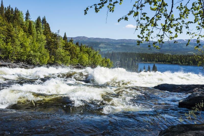 Stromschnellen Tannforsen-Wasserfall Schweden stockbilder