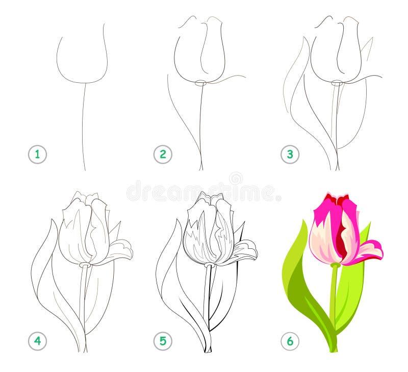 Strona pokazuje dlaczego uczyć się rysować pięknego kwiatu tulipanu krok po kroku Rozwija dziecko umiej?tno?ci dla rysowa? i barw ilustracji