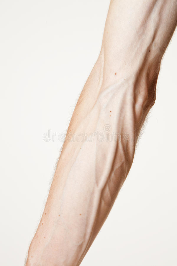 Download Strong arm stock image. Image of strong, cropped, male - 12599009