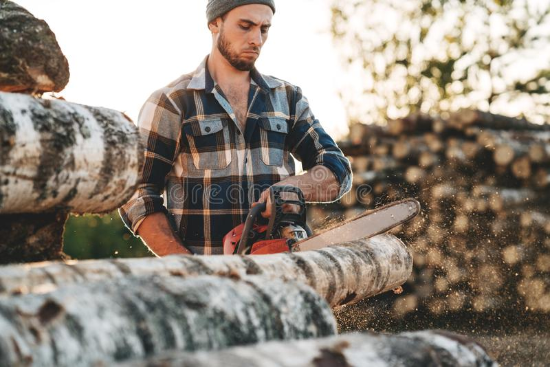 Strong bearded lumberjack in plaid shirt sawing tree with chainsaw stock photography