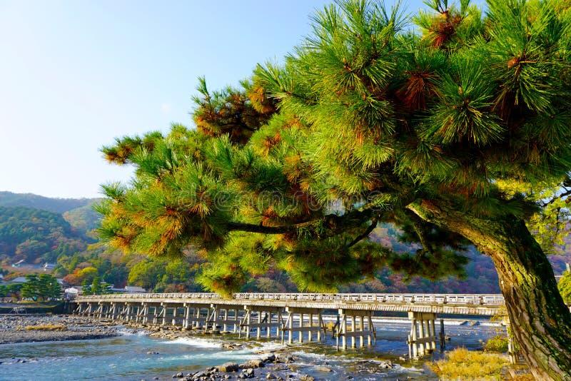 The scenic pine tree at arashiyama bridge royalty free stock image
