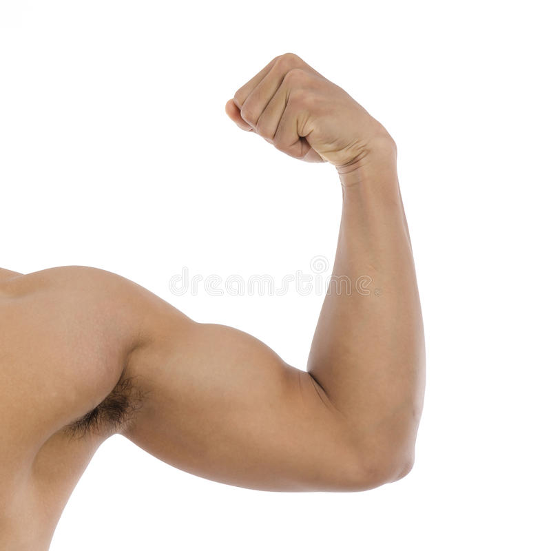 Strong biceps on a white background royalty free stock photography