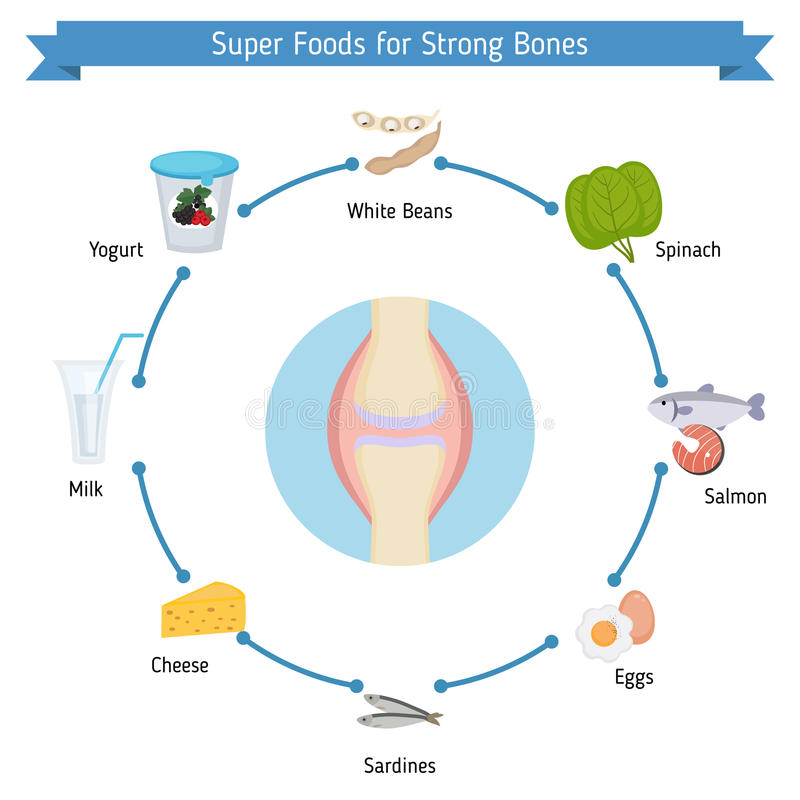 Strong bones foods infographics stock illustration