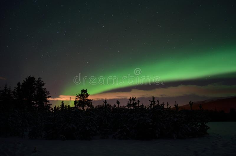 Strong dreamy aurora borealis on star filled nigh sky over spruce trees and snowy field. In the arctic circle stock photo
