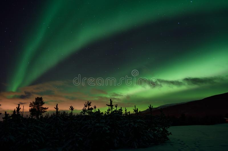 Strong dreamy aurora borealis on star filled nigh sky over spruce trees and snowy field. In northern norway royalty free stock photos