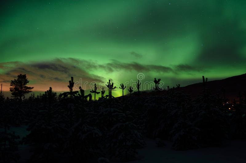 Strong dreamy aurora borealis on star filled nigh sky over spruce trees. And snowy field stock photography