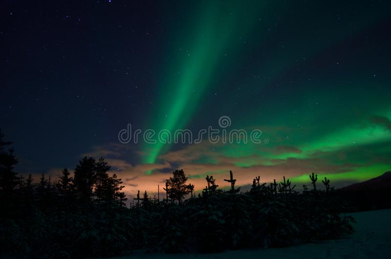 Strong dreamy aurora borealis on star filled nigh sky over spruce trees. And snowy field royalty free stock photos