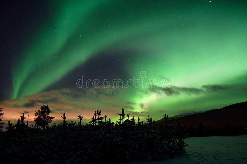 Strong dreamy aurora borealis on star filled nigh sky over spruce trees. And snowy field stock images
