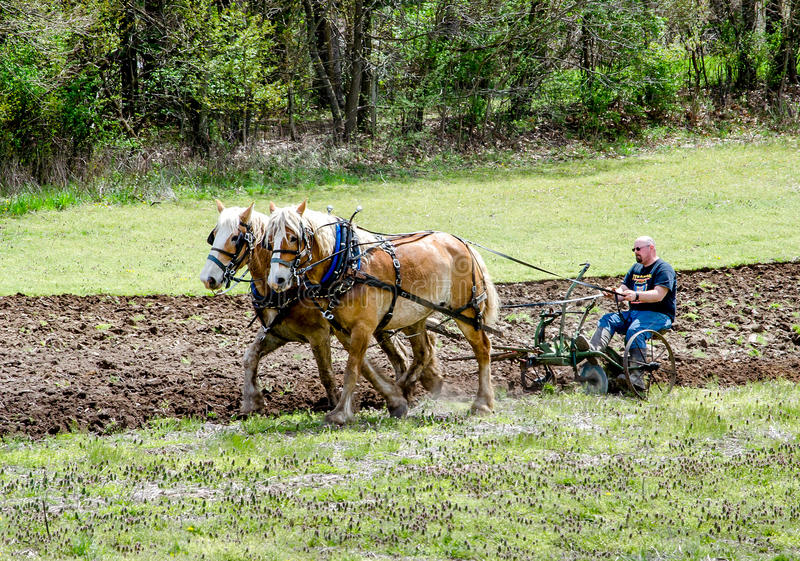strong farmer and horse team plowing demonstration royalty free stock photography