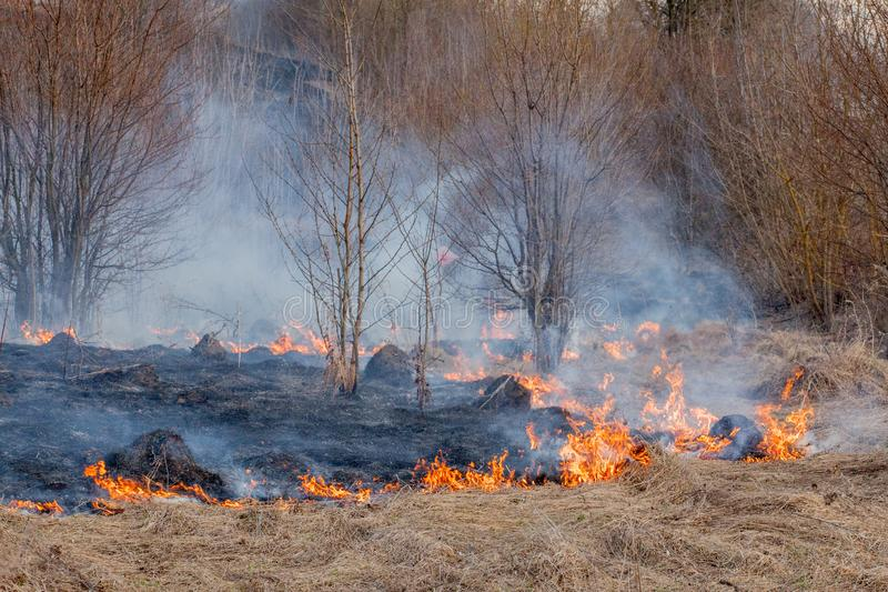 A strong fire spreads in gusts of wind through dry grass, smoking dry grass, concept of fire and burning of the forest.  royalty free stock photography