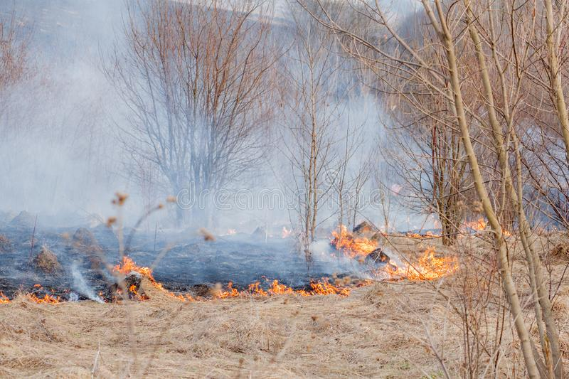 A strong fire spreads in gusts of wind through dry grass, smoking dry grass, concept of fire and burning of the forest.  royalty free stock photo