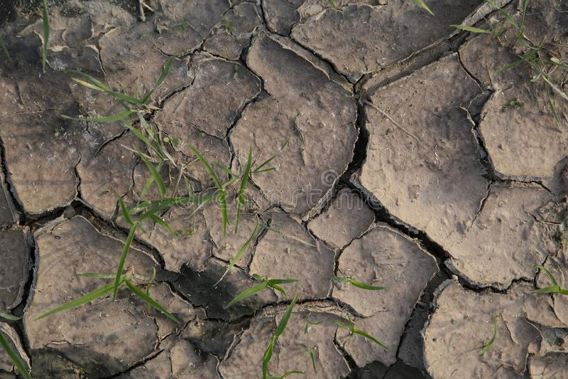 Strong green plants breaks through dry ground. Strong green plants breaks through dry cracked ground close up royalty free stock photo