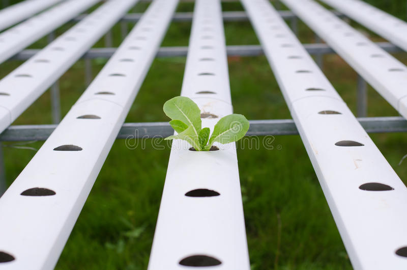 Strong growth and alone concept royalty free stock images