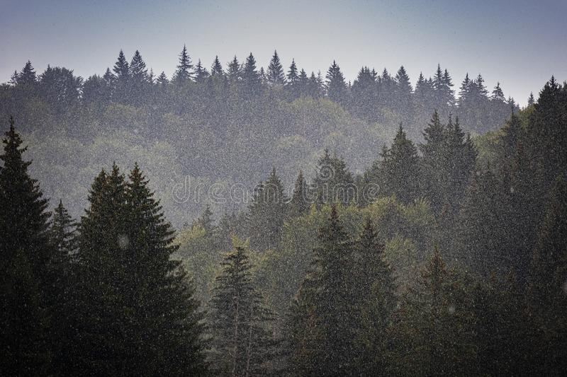 A Hailstorm over a Forest royalty free stock photos