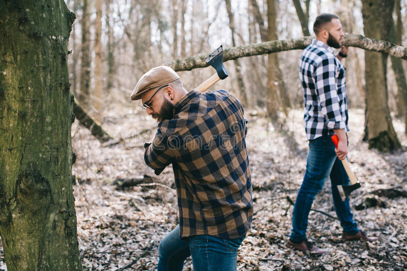 Strong lumberjack chopping wood. Strong and diligent lumberjack working in the forest. Lumberjack working with an ax stock photos