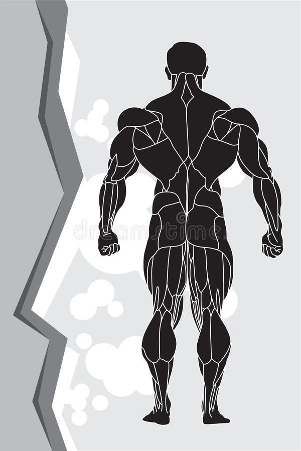 Download Strong man stock vector. Image of model, fitness, exercise - 19550052
