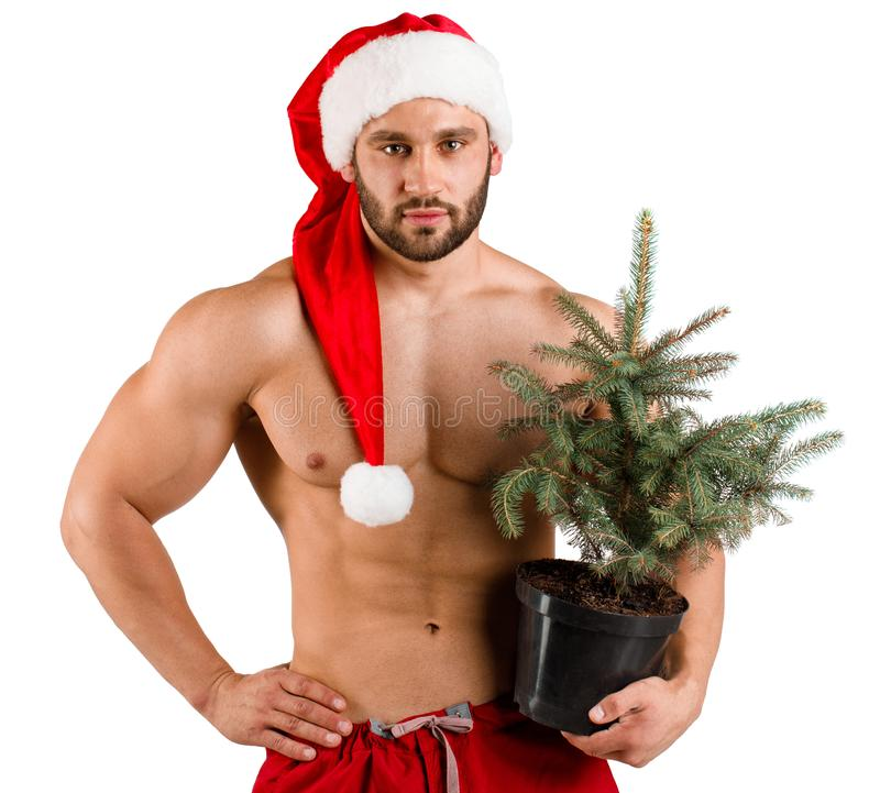 Strong man dressed as Santa Claus with a pot with New Year tree in his hand and red hat, isolated over white background. Serious strong man dressed as Santa stock photo