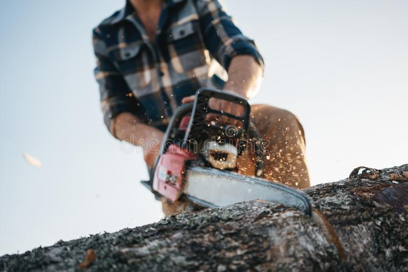 Strong professional logger in plaid shirt sawing tree with chainsaw stock images