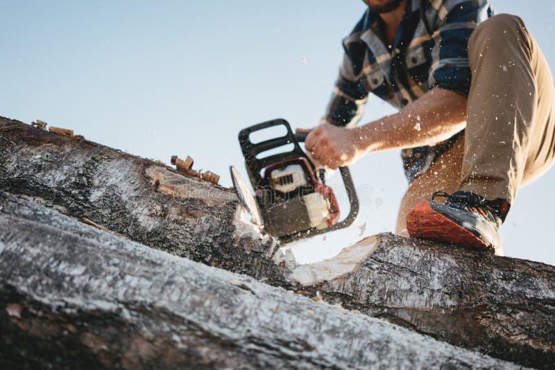 Strong professional lumberman use chainsaw on sawmill. Lumberjack sawing big tree stock photo
