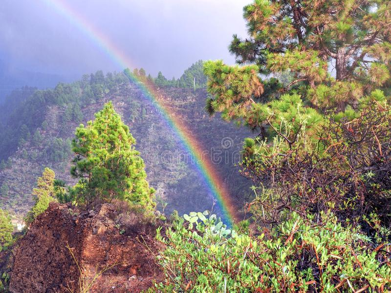 Strong rainbow in the woodland on La Palma. He goes steeply off the ground high above the trees in the dew clouded sky stock image