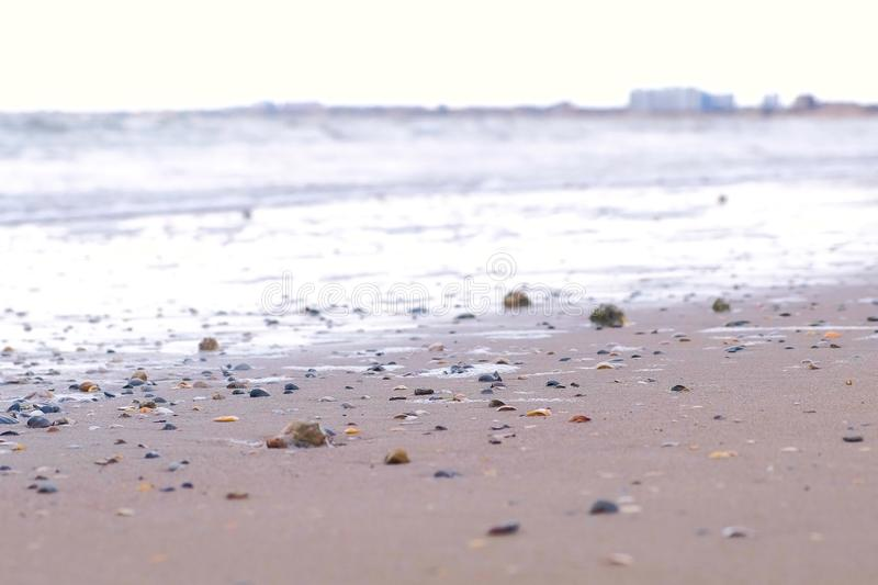 Strong sea waves on the sandy shore. Shells of rapan on the sand. Strong sea waves on the sandy shore. Shells of rapan on the sand royalty free stock photography