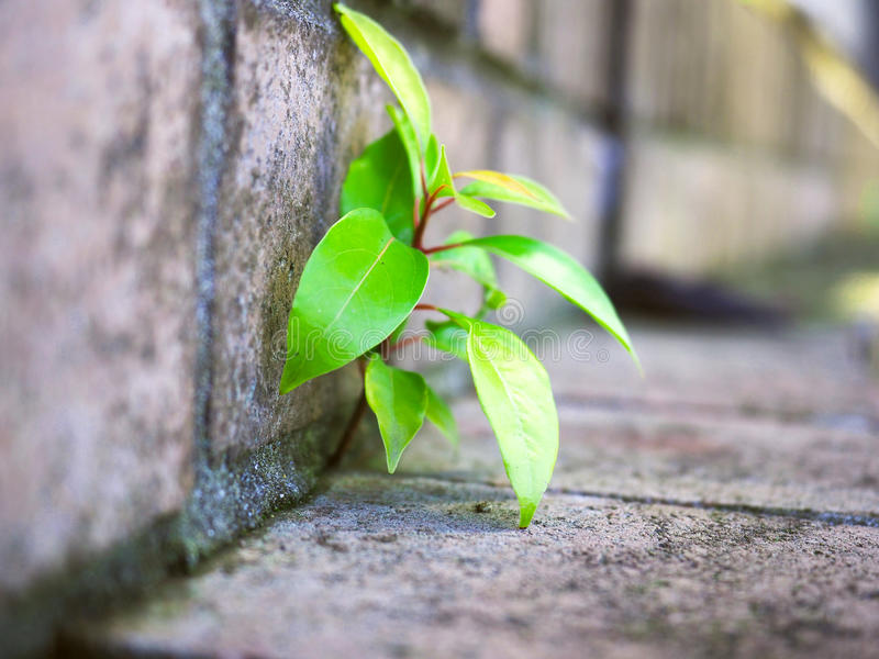 The strong small tree royalty free stock image