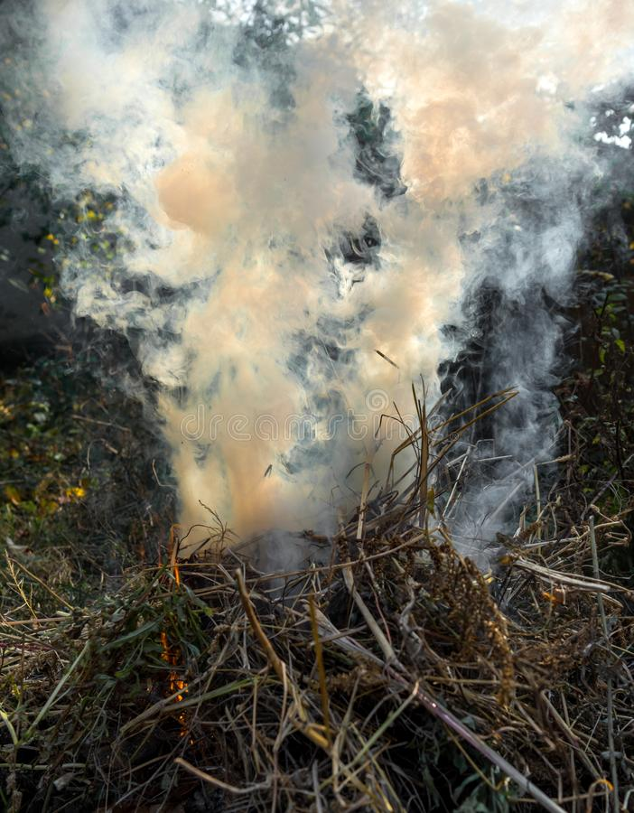 Strong smoke from fire.  Cleaning fields of reeds, dry grass. Natural disaster stock photo
