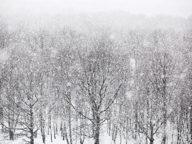 Strong snowing over woods in winter. Day royalty free stock images