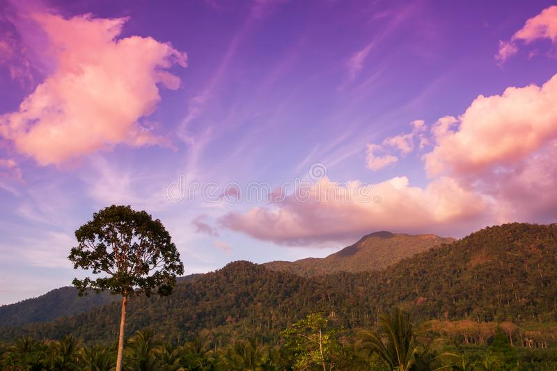 A strong tree stands alone near a mountain range at dusk. Dramatic clouds and sunset sky in backgrounds. Khao Phanom Bencha, Krabi, Thailand royalty free stock photography
