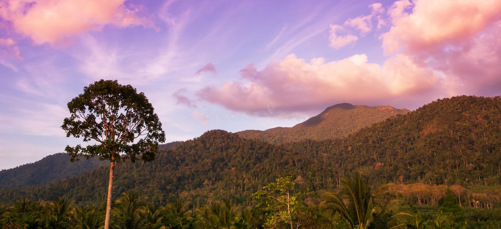 A strong tree stands alone near a mountain range at dusk. Dramatic clouds and sunset sky in backgrounds. Khao Phanom Bencha, Krabi, Thailand royalty free stock image