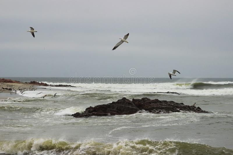 Strong waves on the coast of the Atlantic Ocean in Namibia and sea gulls soaring royalty free stock images
