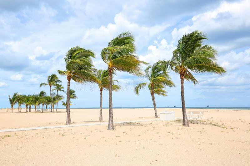Hurricane force winds blows sand and palm trees royalty free stock photography