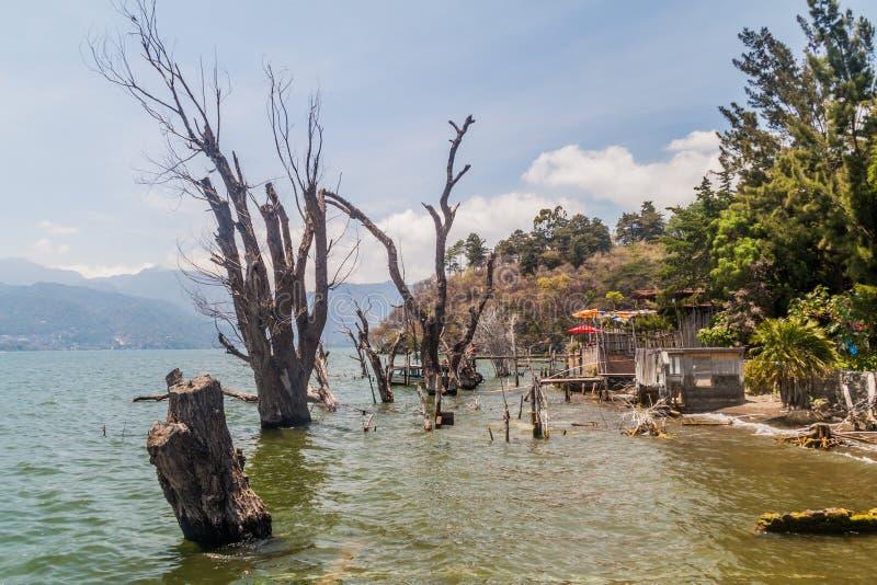 Stronniczo zanurzający drzewa blisko San Marcos losu angeles Laguna wioski, Guatema obrazy royalty free