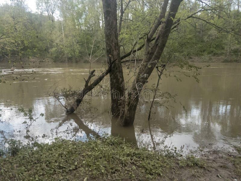 Stronniczo zanurzający drzewa na banku zalewająca rzeka zdjęcie stock