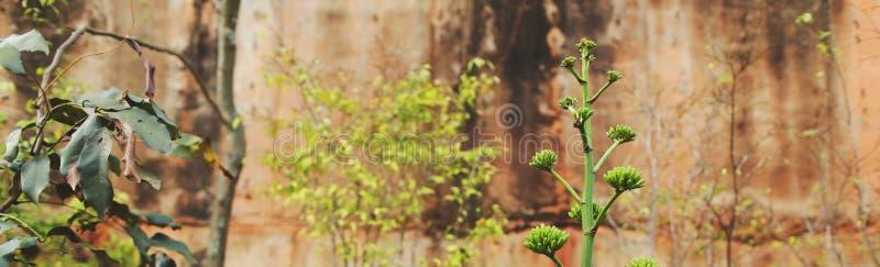 Strony internetowej kłoszenie i sztandar tropikalne zbliżenie rośliny w rockowym tle fotografia royalty free