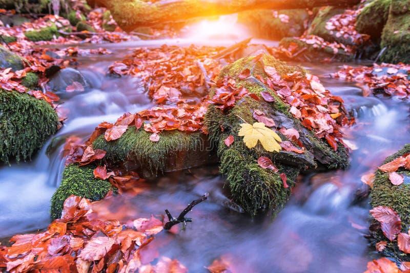 Stroom in de herfstbos royalty-vrije stock afbeeldingen