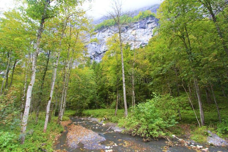 Stroom in de vallei stock afbeeldingen