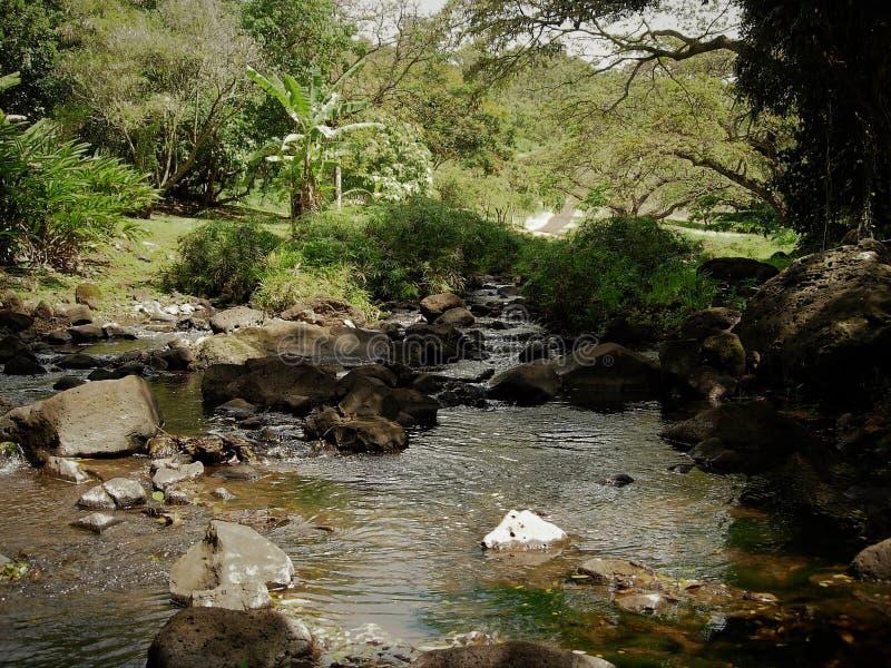 Stroom die in een bosvijver met rotsen en overhangende bomen op Kauai Hawaï leiden stock fotografie