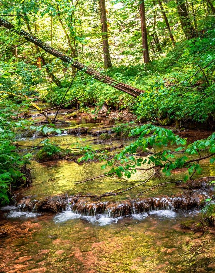 Stroom door het zonnige bos royalty-vrije stock fotografie