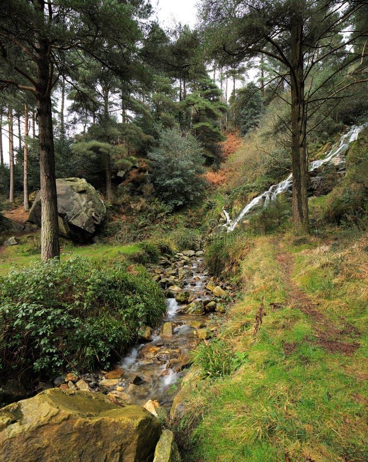 Stroom in het bos royalty-vrije stock afbeeldingen