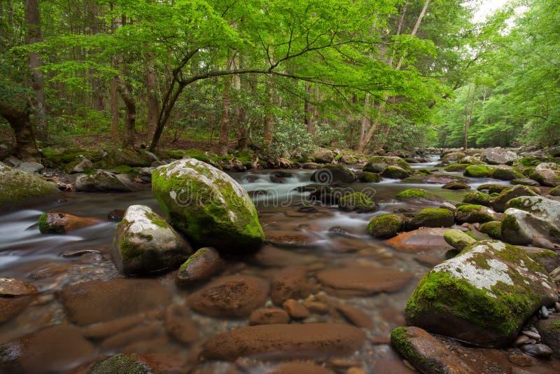 Stroom, het Grote Rokerige Nationale Park van Bergen royalty-vrije stock afbeeldingen