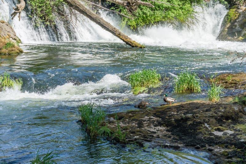 Stroomafwaarts van Waterval stock fotografie
