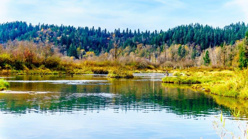Stroomafwaarts vissend het spwning - gronden van Stave River van de Ruskin-Dam in Hayward Lake dichtbij Opdracht, BC, Canada stock afbeelding