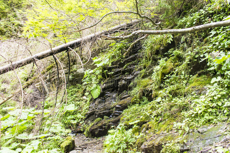 Stroomstromen over een rots stock foto